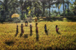 11-Ricefield-Walk