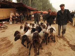 South-Xinjiang-05