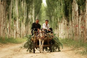 South-Xinjiang-18